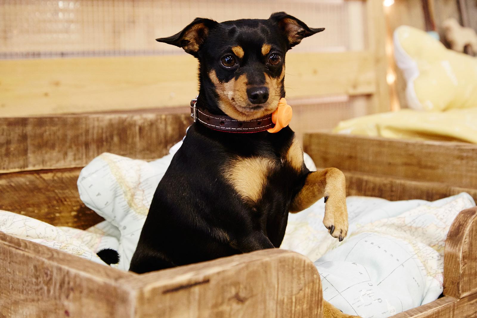 ropa y complementos para animales